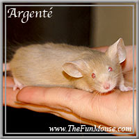 Varieties of Mice Argent13