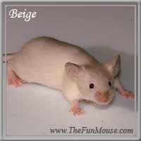 Varieties of Mice Beiges10