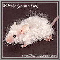Varieties of Mice Bewsm10