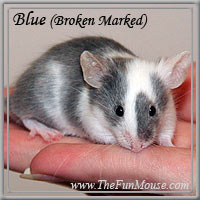 Varieties of Mice Blue2s10