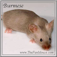 Varieties of Mice Burmes10