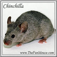 Varieties of Mice Chinch10