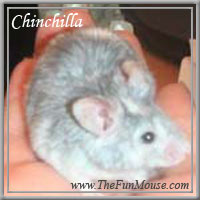 Varieties of Mice Chinch11