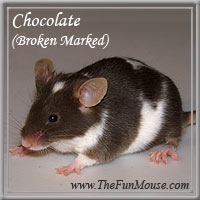 Varieties of Mice Chocol10
