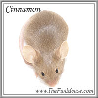 Varieties of Mice Cinnam10