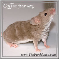 Varieties of Mice Coffee10