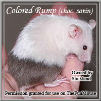 Varieties of Mice Colore10