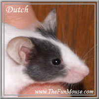 Varieties of Mice Dutch210