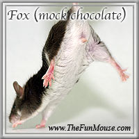 Varieties of Mice Foxsm10