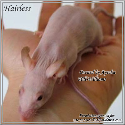Varieties of Mice Hairle10