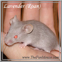 Varieties of Mice Lavend10