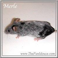 Varieties of Mice Merles10