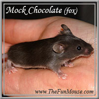 Varieties of Mice Mockch10