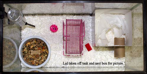 Breeding Packet Nurser11