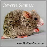 Varieties of Mice Revers10