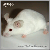 Varieties of Mice Rewsm10