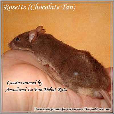 Varieties of Mice Rosett10