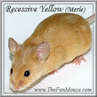 Varieties of Mice Ry1sm10