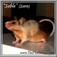 Varieties of Mice Sables10