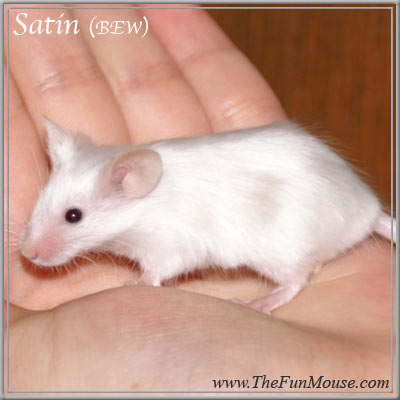 Varieties of Mice Satinl10