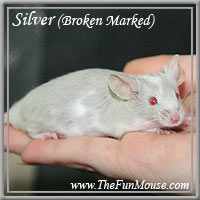 Varieties of Mice Silver11