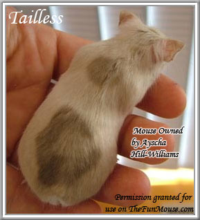 Varieties of Mice Taille10