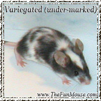 Varieties of Mice Varieg11