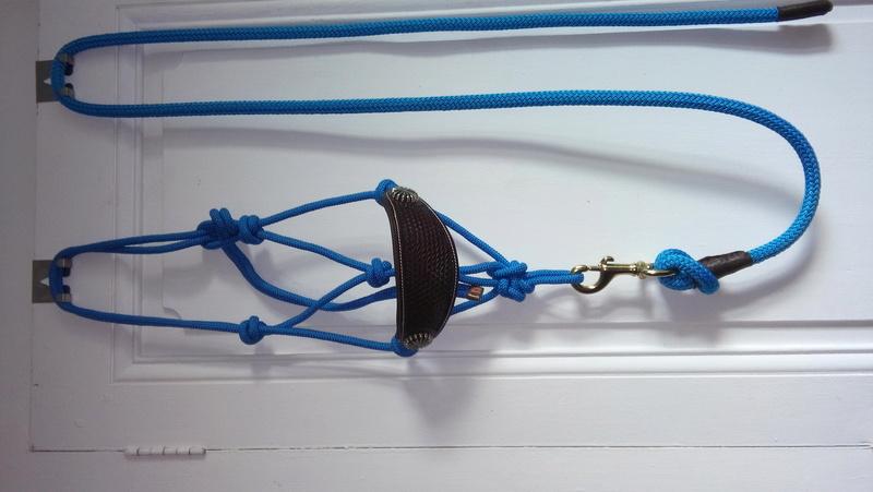 licols style western corde bleue roi et cuir avec longes assorties VENDUS 20170820