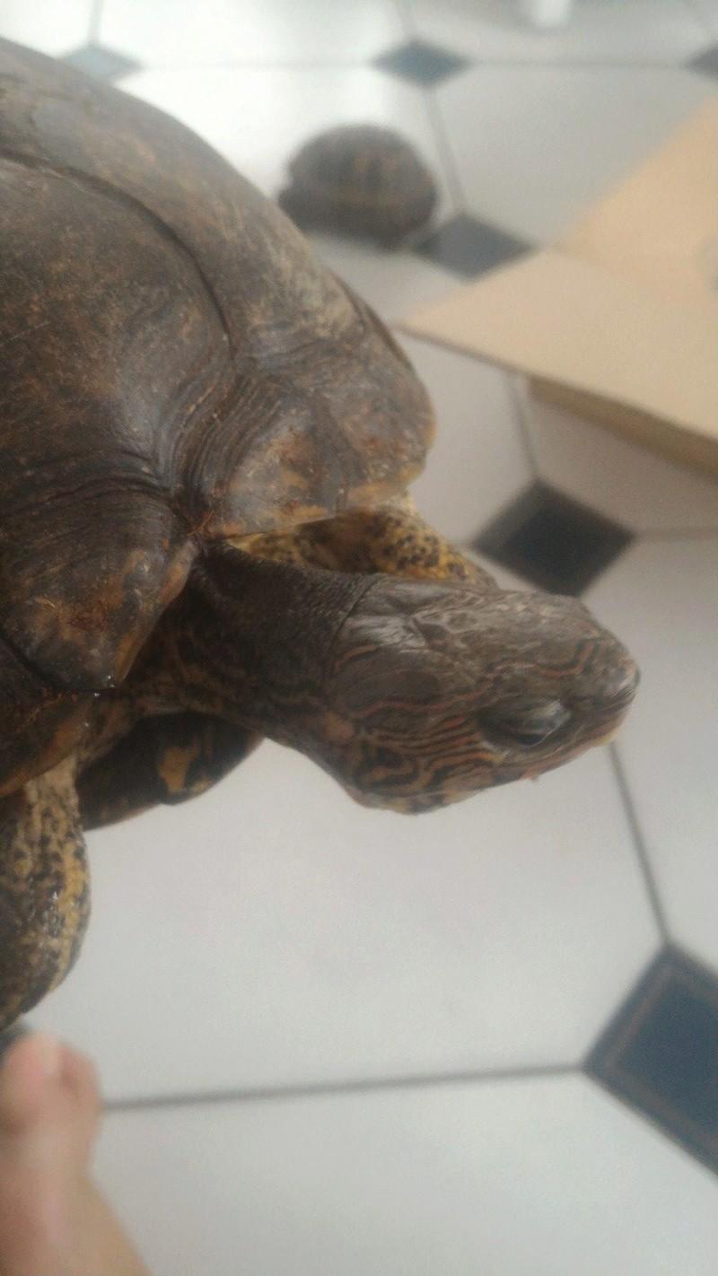 Identification et sexage de 3 tortues 20727210