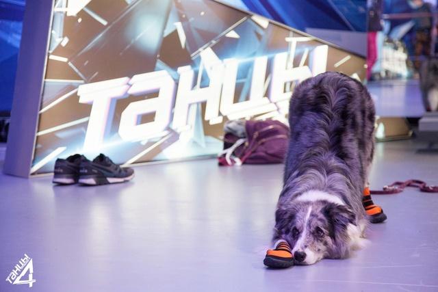 BaDoGood плохая-хорошая собака - Портал 09667710