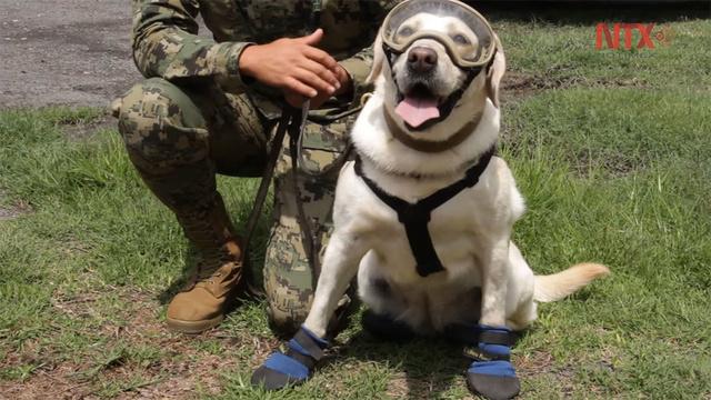 BaDoGood плохая-хорошая собака - Портал O_145410