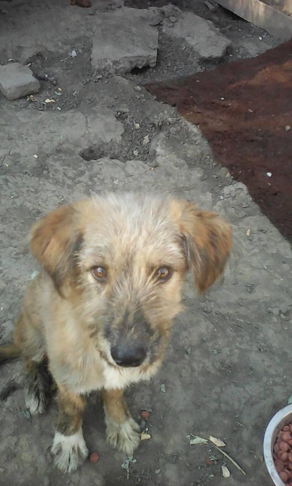 TINNA,  née en 2012 trouvée dans la rue par Lenuta - marrainée par lilirez02 -R-SC 19059210