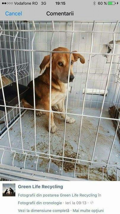 TINNA,  née en 2012 trouvée dans la rue par Lenuta - marrainée par lilirez02 -R-SC 21691310