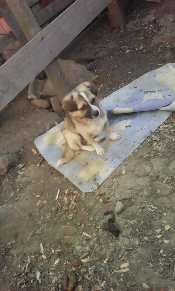 TINNA,  née en 2012 trouvée dans la rue par Lenuta - marrainée par lilirez02 -R-SC 21740510