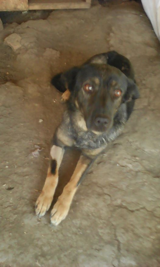 TINNA,  née en 2012 trouvée dans la rue par Lenuta - marrainée par lilirez02 -R-SC 21740710