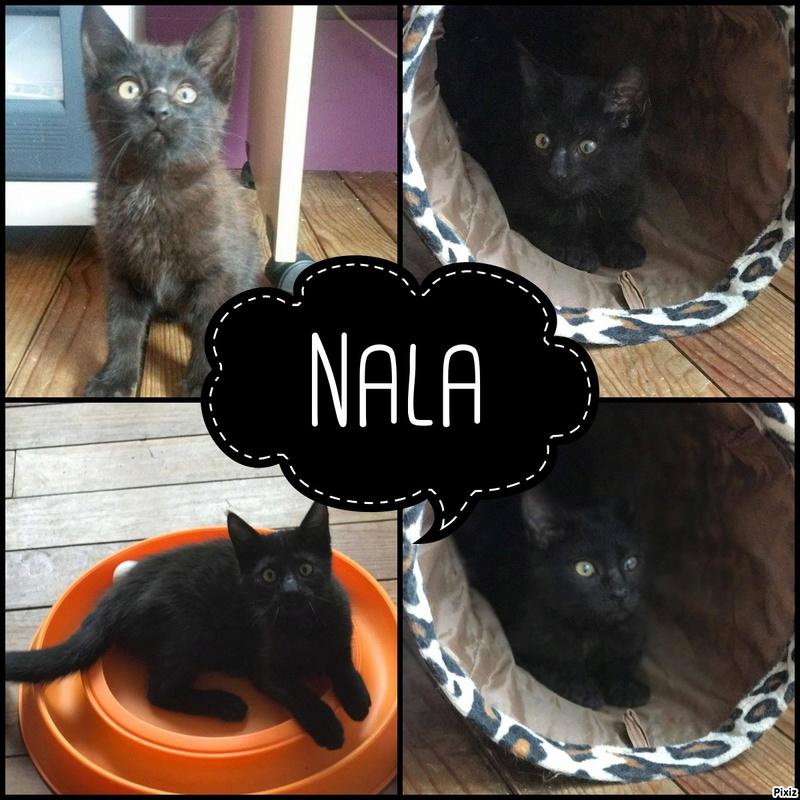 Nala Pixiz-10