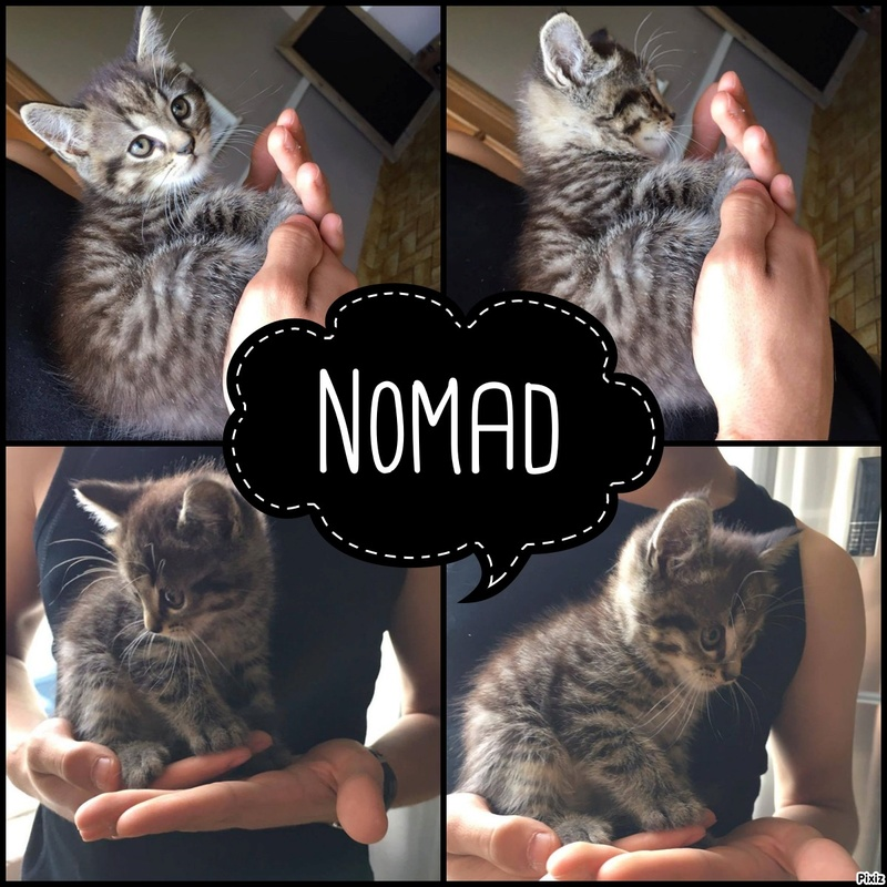 Nomad-  Pixiz-15