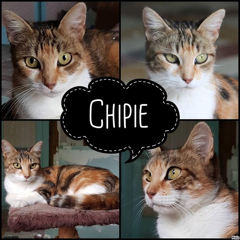 Chipie - a réserver Pixiz-18
