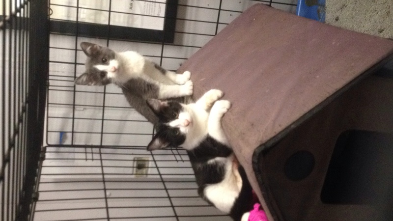 My Kittens :) Img_0111