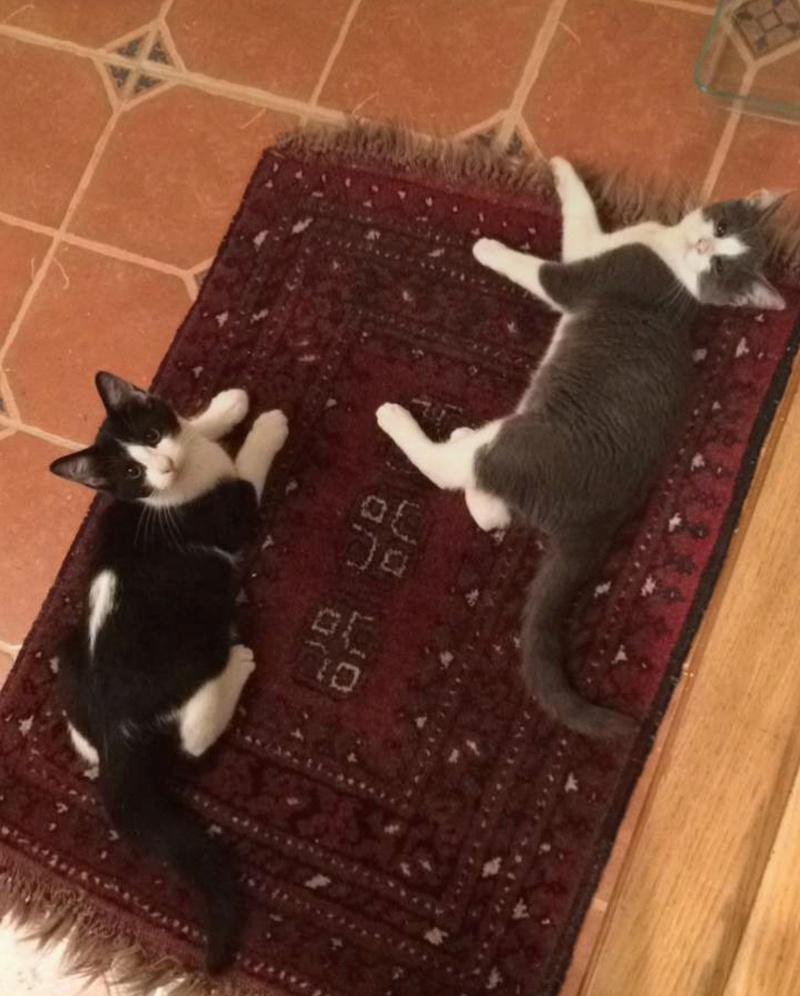 My Kittens :) Img_0112