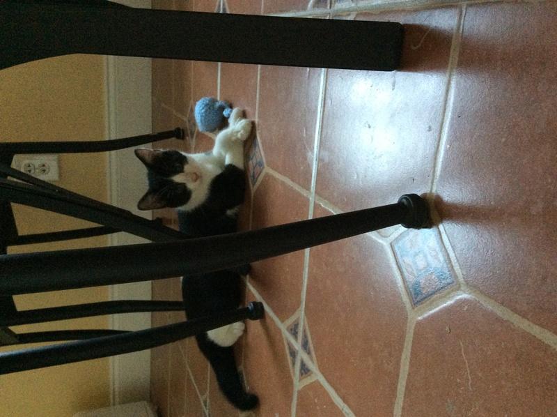 My Kittens :) Img_0113