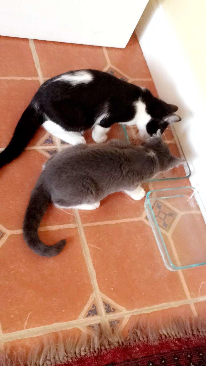 My Kittens :) Img_0115