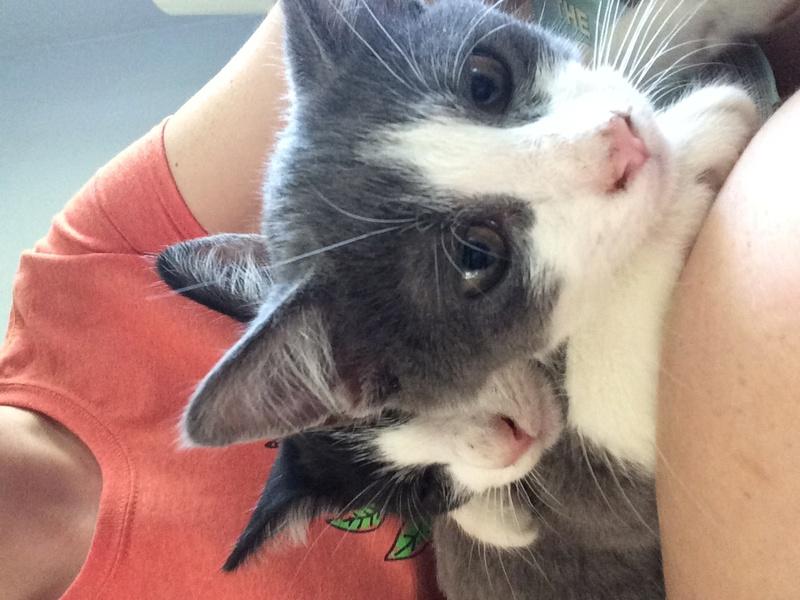 My Kittens :) Img_0117
