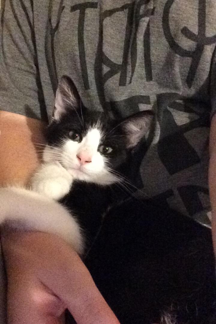 My Kittens :) Img_0118