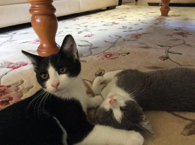 My Kittens :) Img_0120