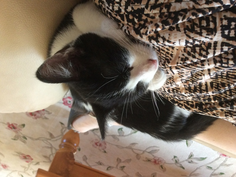 My Kittens :) Img_0121