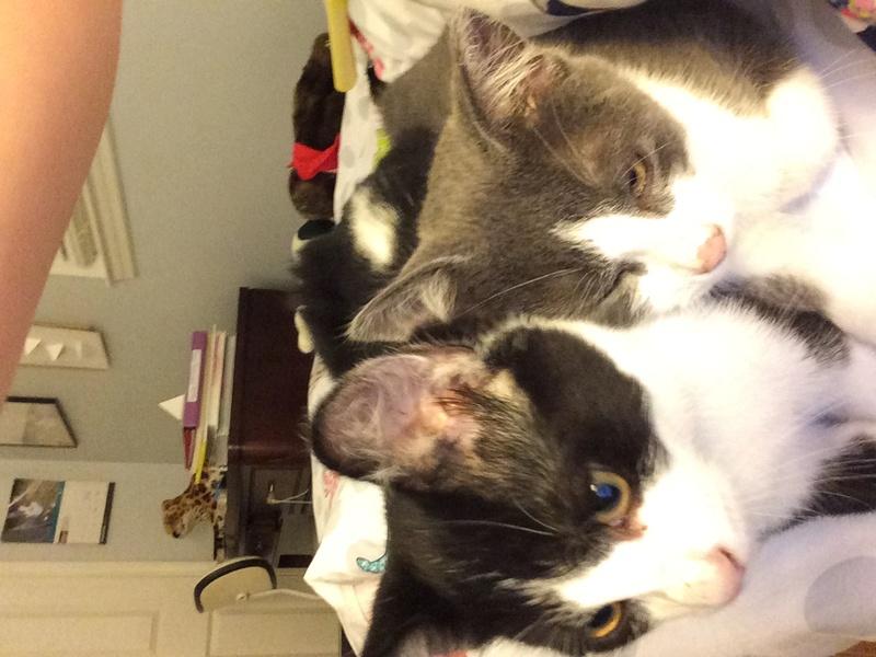 My Kittens :) Img_0210
