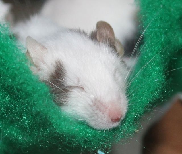 Sleepy Willow Img_6511