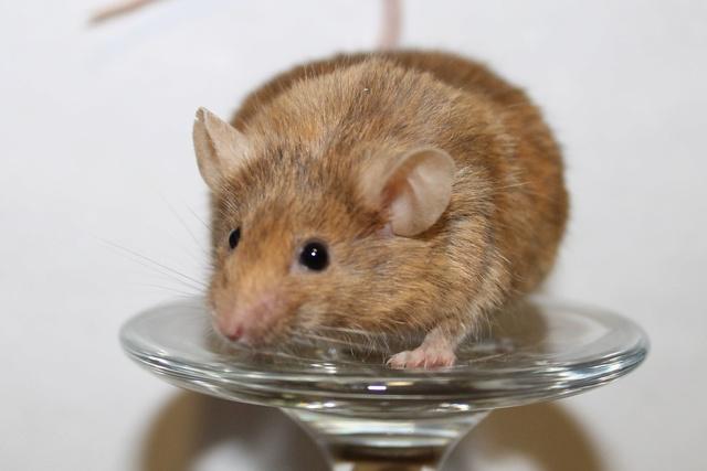 Mice on a wine glass Img_6816