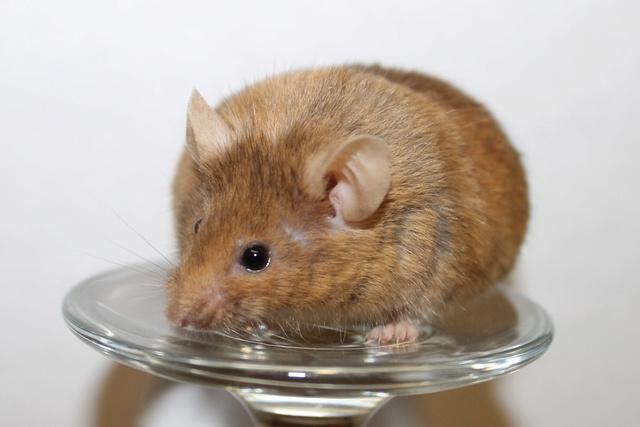 Mice on a wine glass Img_6817